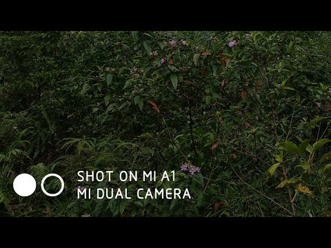 "How to remove the text ""Shot on MI A1 dual camera"""